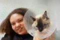 dickin memorial animal hospital representative and cat