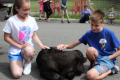 students petting calf