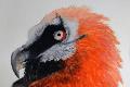"artwork titled ""Phoenix Risen"""