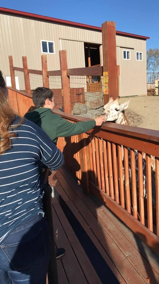 students feed giraffe at animal adventure
