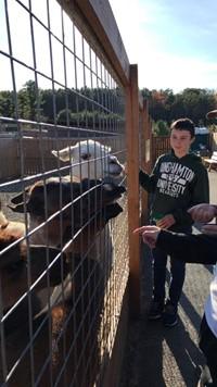 students feed alpacas