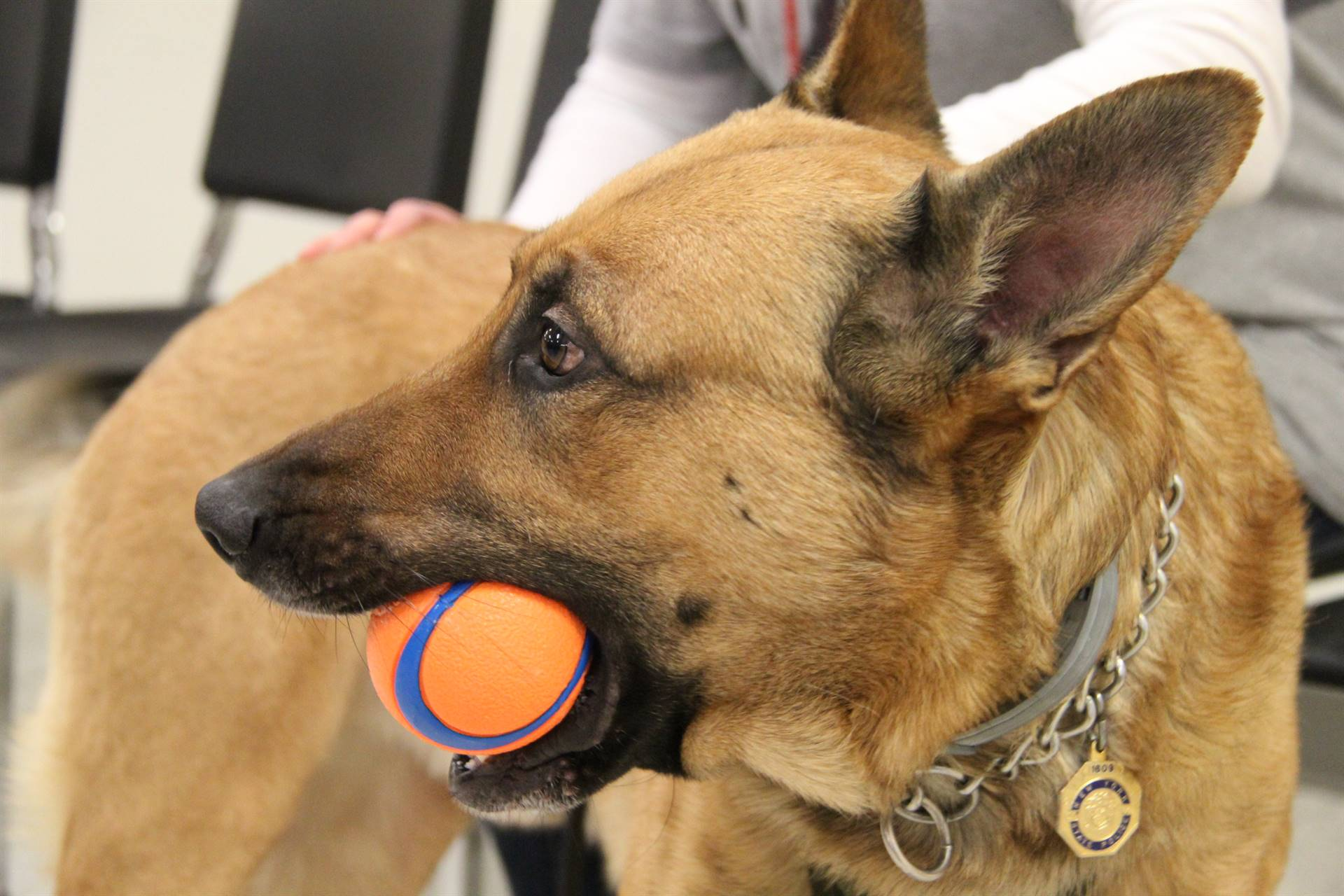 k 9 trooper with ball