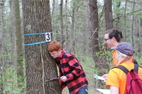 students looking at tree with number 3 on it