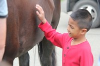 boy petting tiger the horse