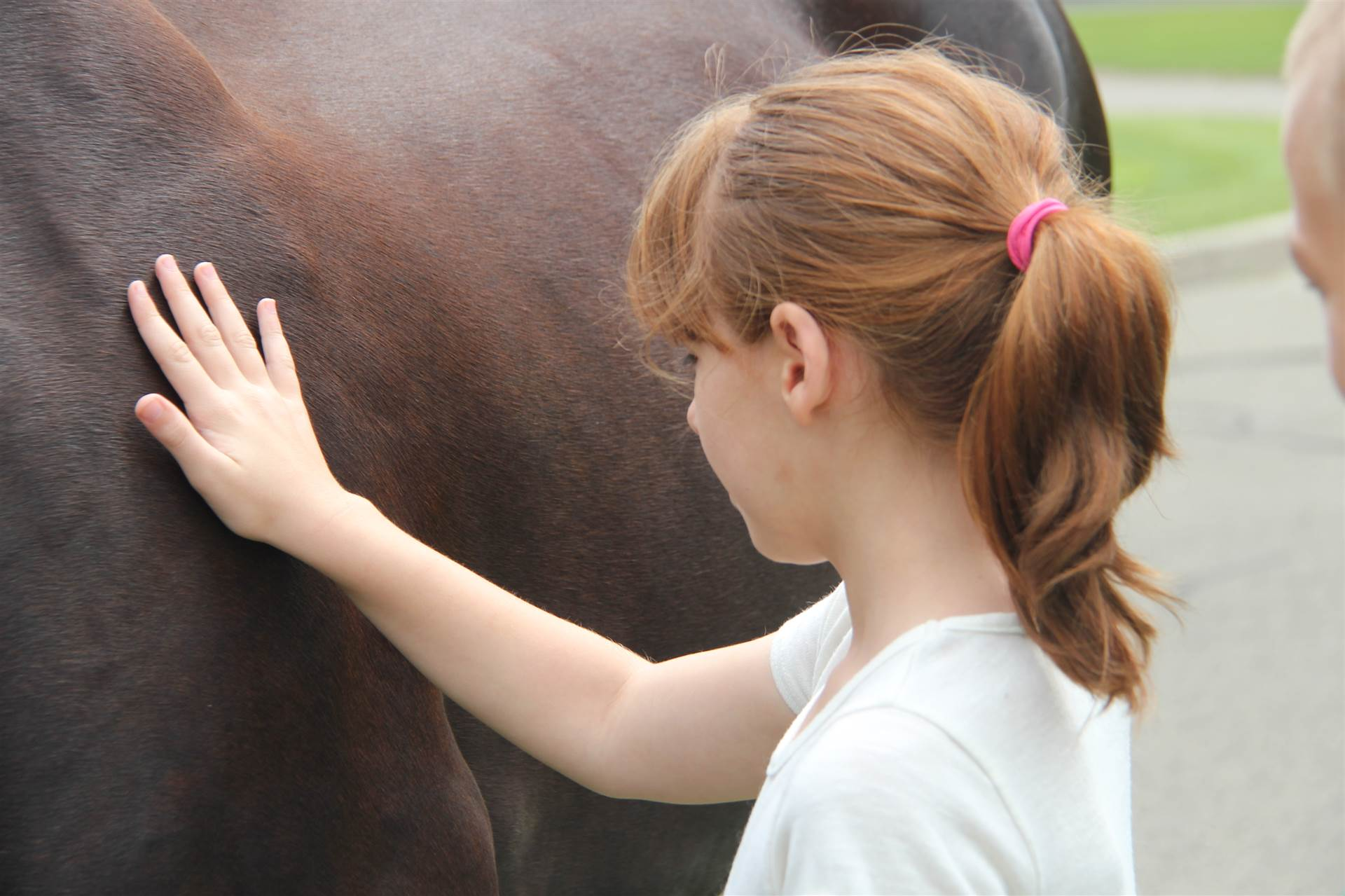 girl pets tiger the horse