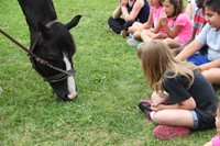 students watch tiger the horse eat grass