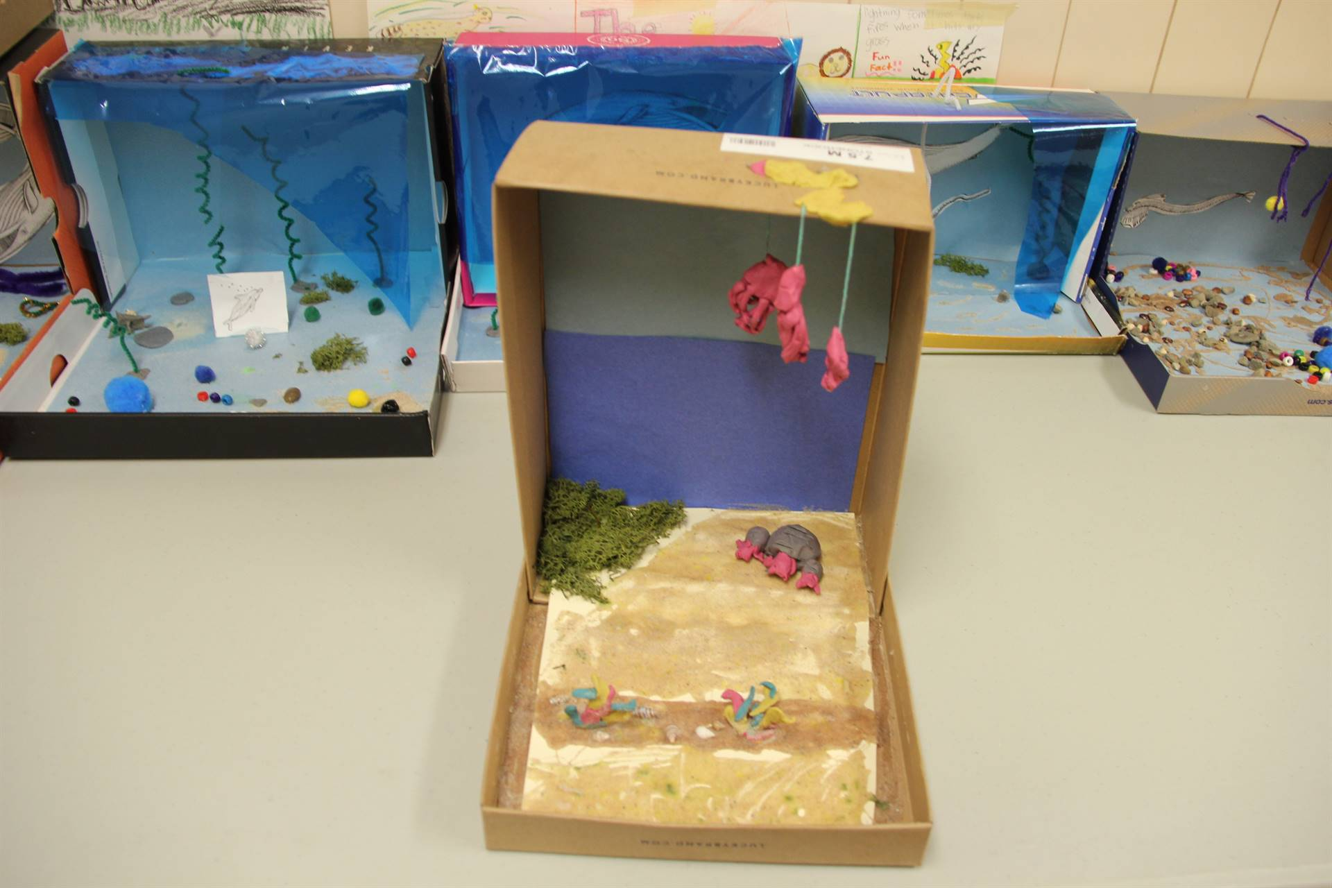 examples of completed ocean habitat shoeboxes