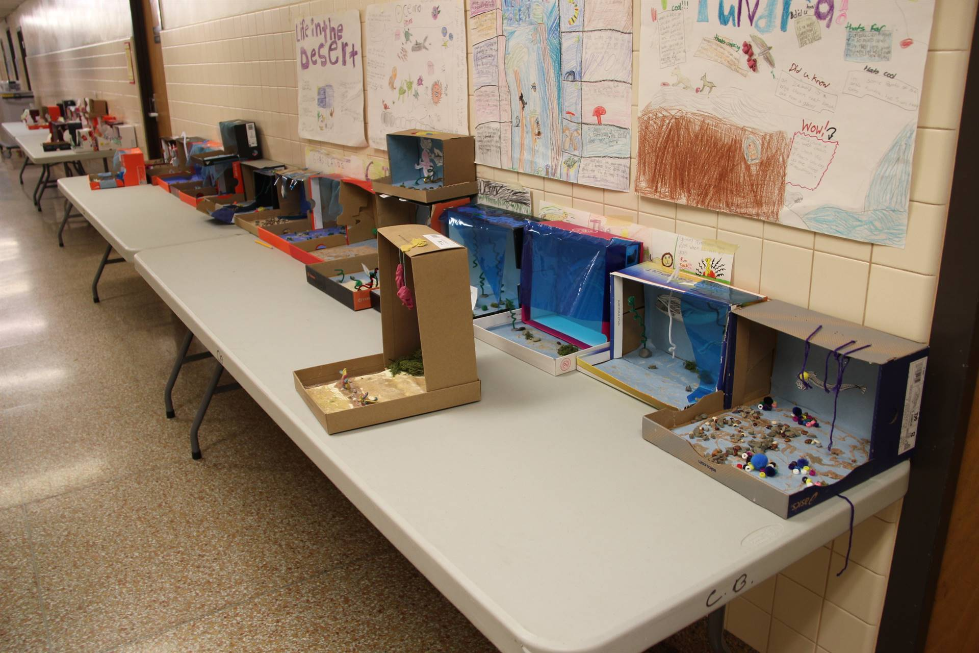 wide shot of table of completed ocean habitat shoeboxes