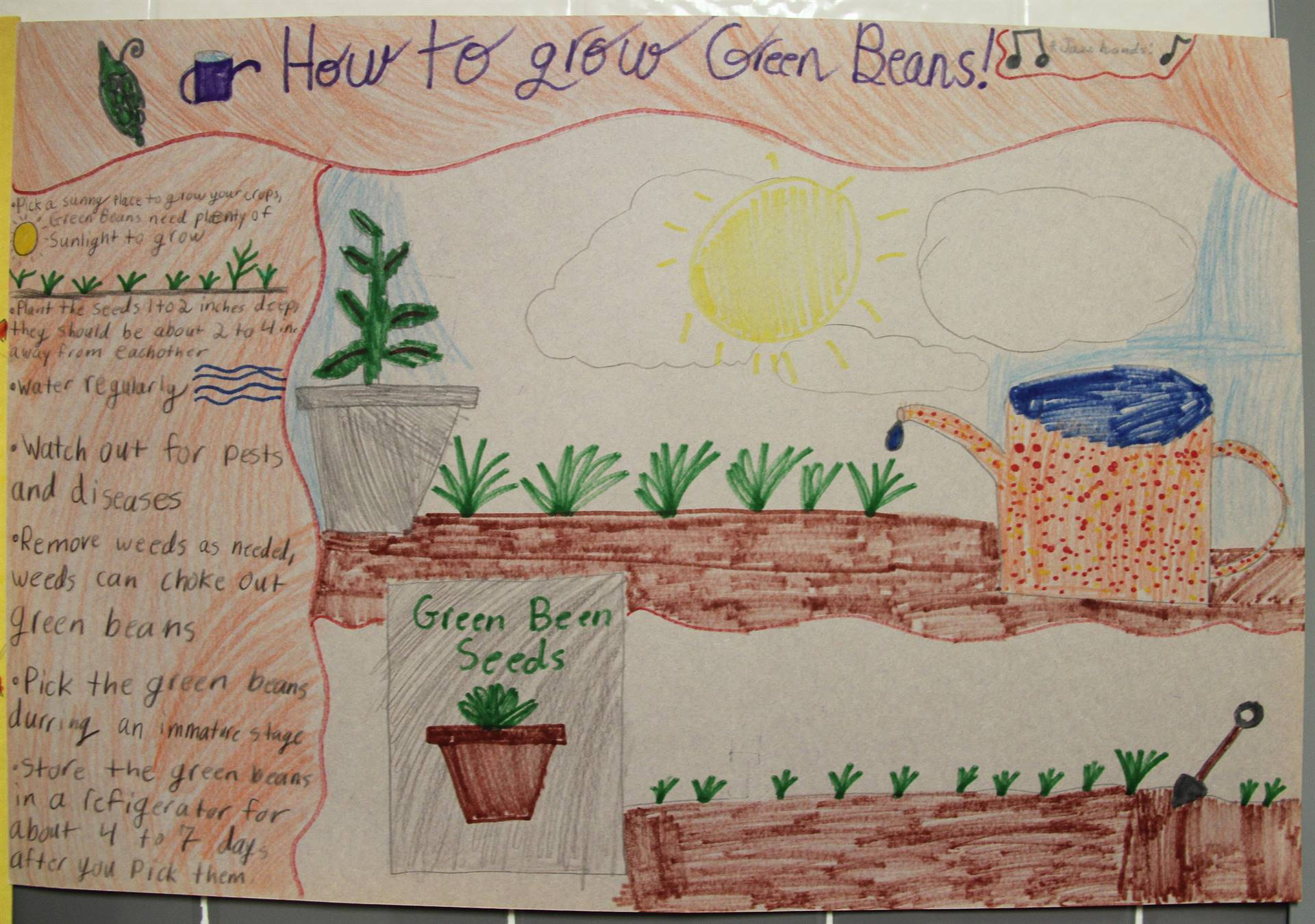 up close of poster about how to grow green beans