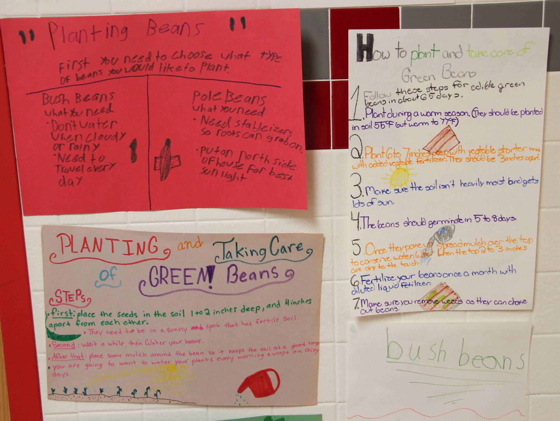 three posters about planting green beans