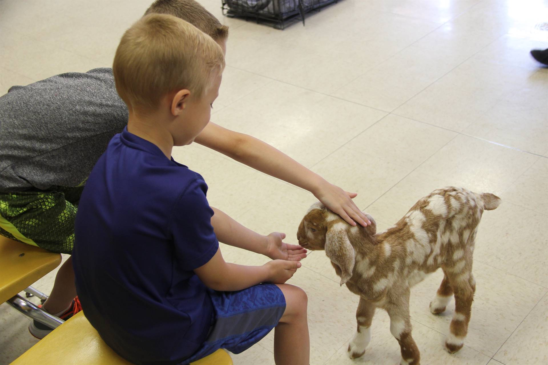 student petting goat 8