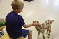 student petting goat 7