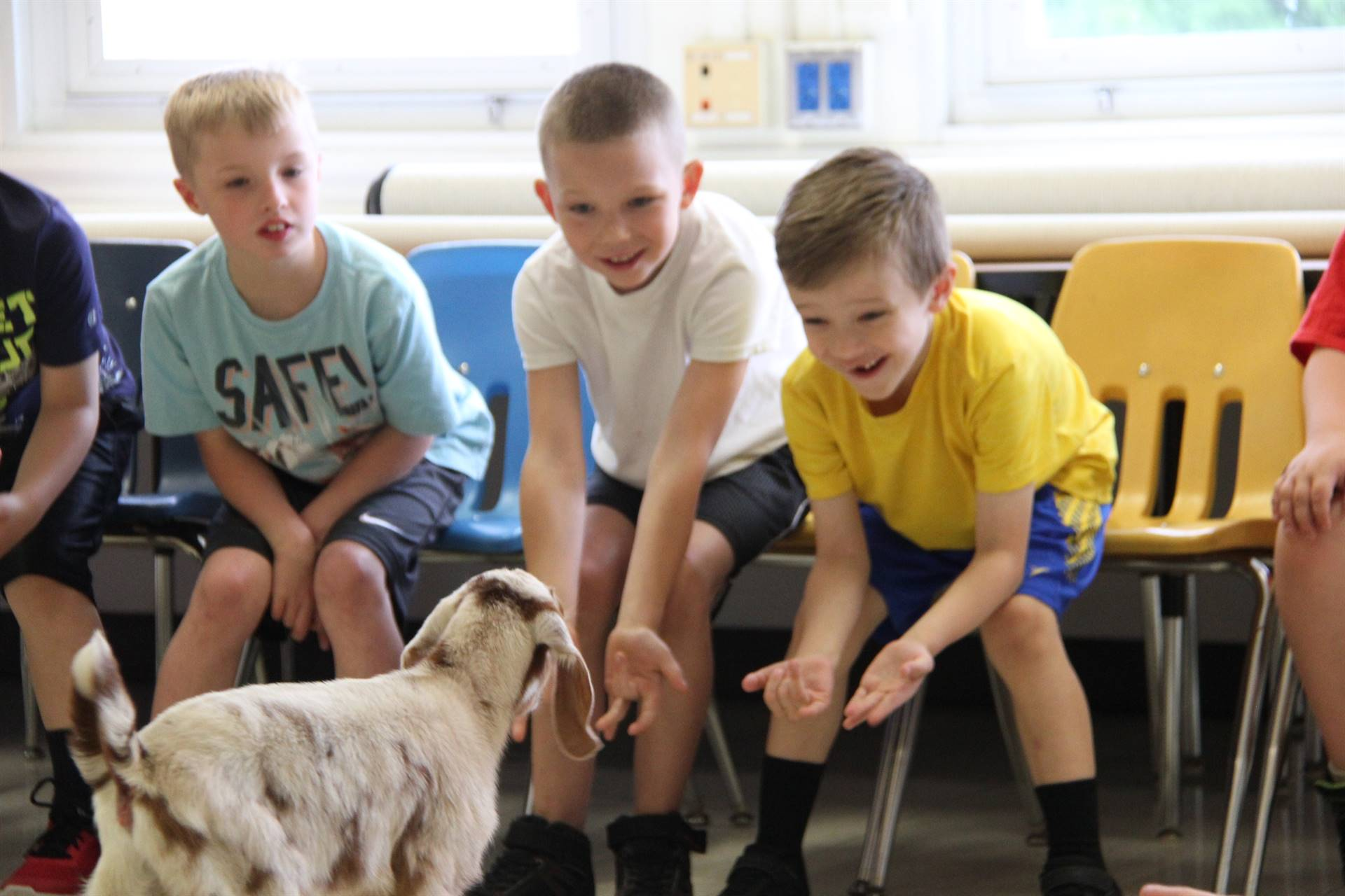 goat visiting students sitting 6