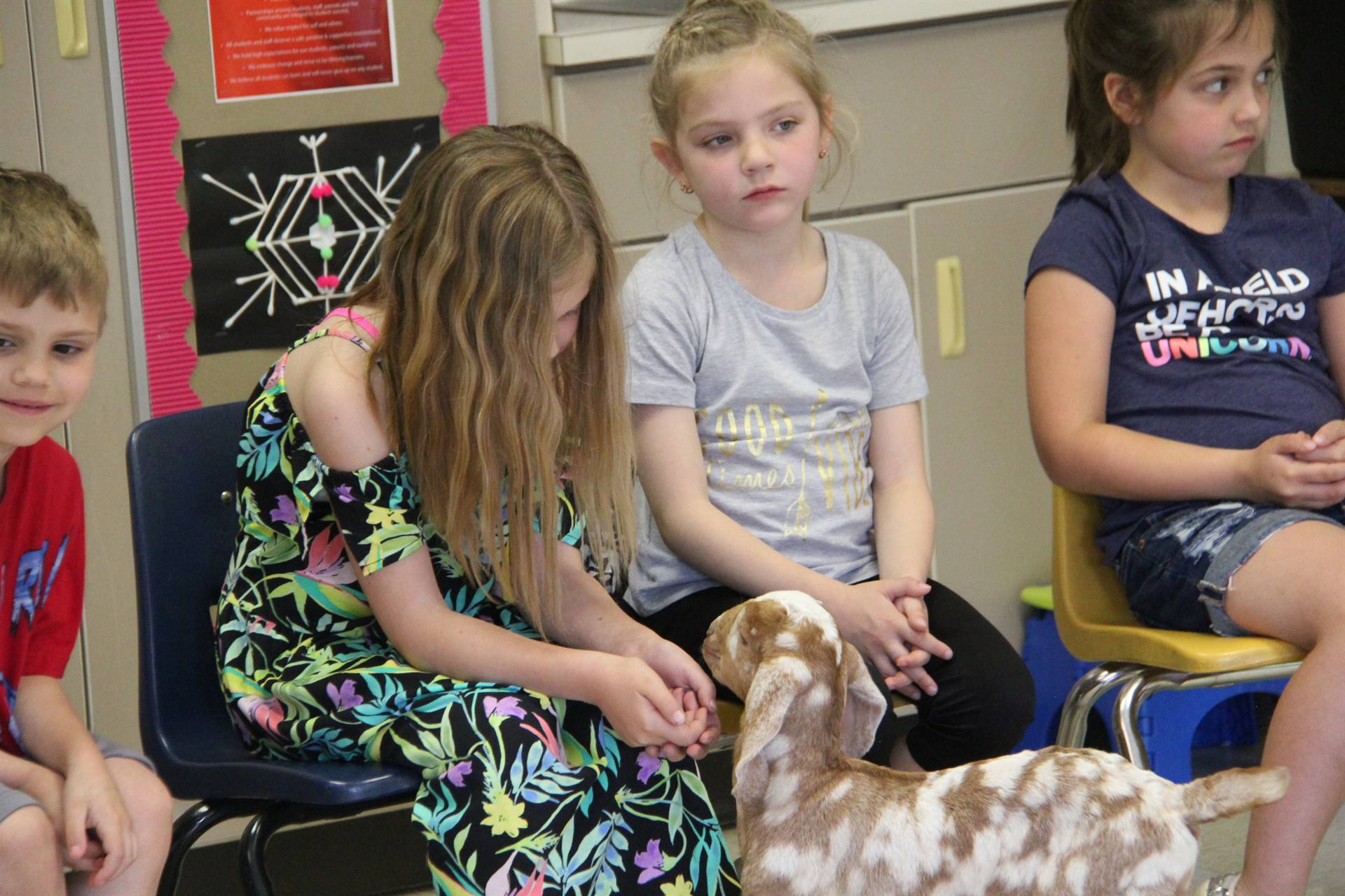 goat visiting student sitting 5