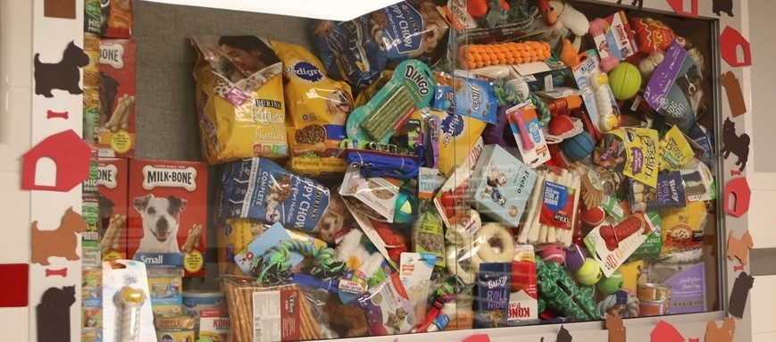 animal shelter items on display